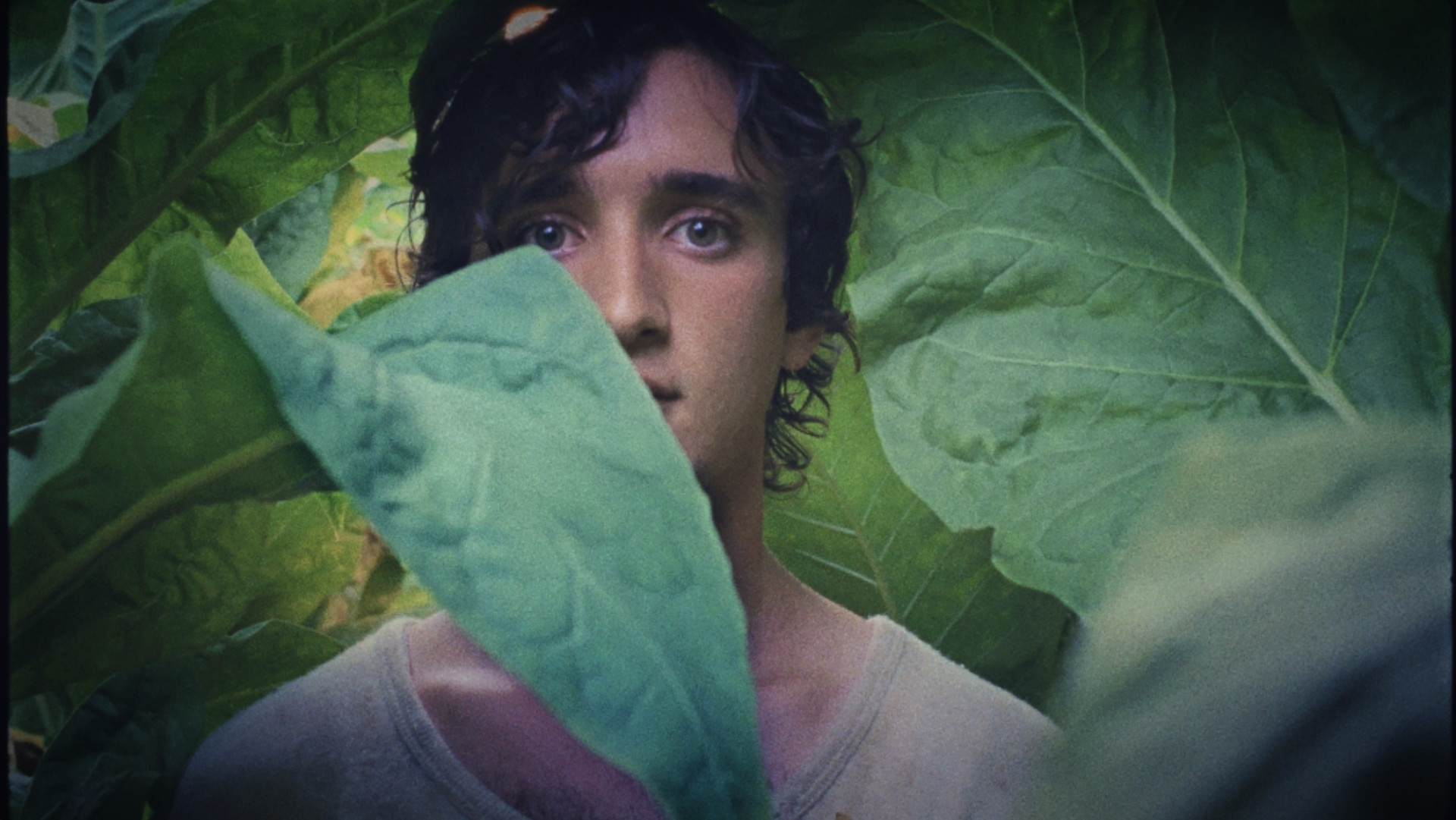 Efa 2018: in nomination Dogman e Lazzaro Felice