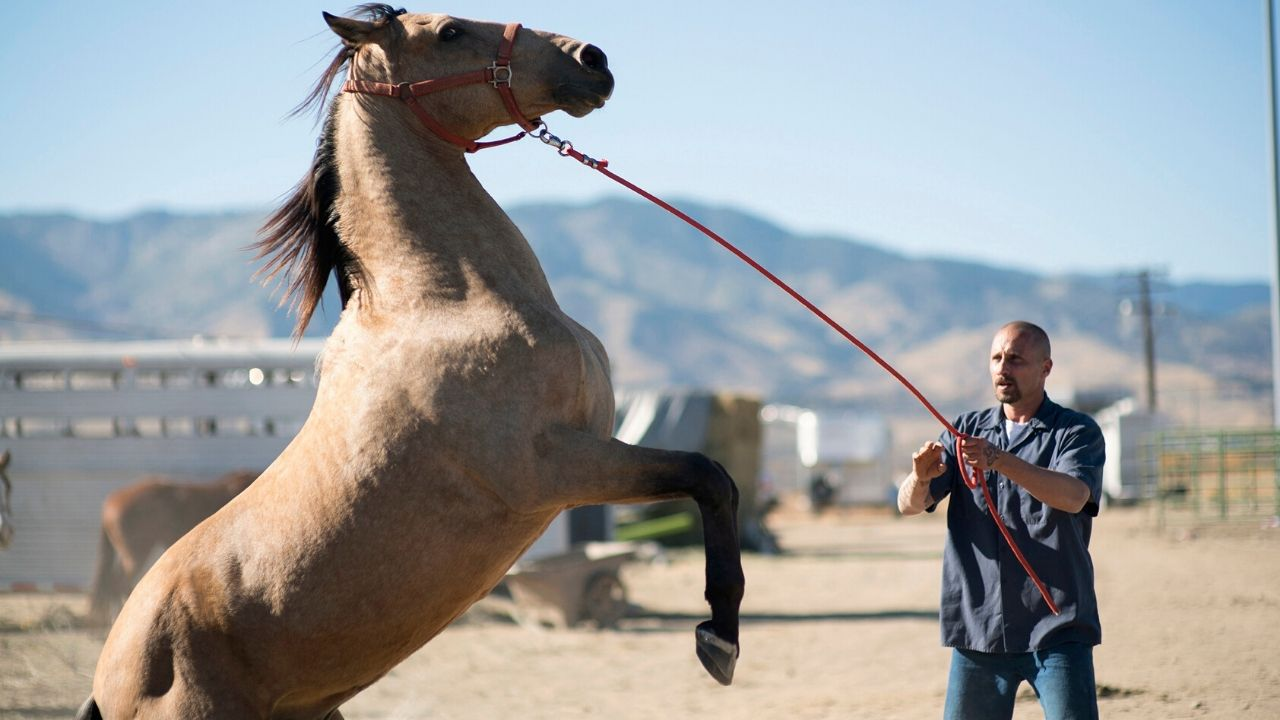 Spirit Award nomination 2020: in gara anche 'The Mustang' (MIA|Film Co-production Market 2015)